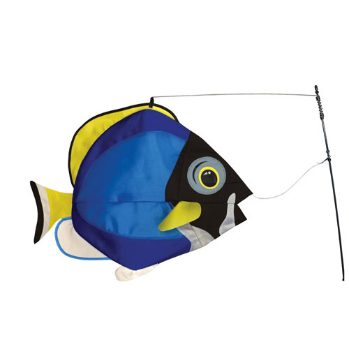 Powder Blue Surgeonfish Swimming Fish
