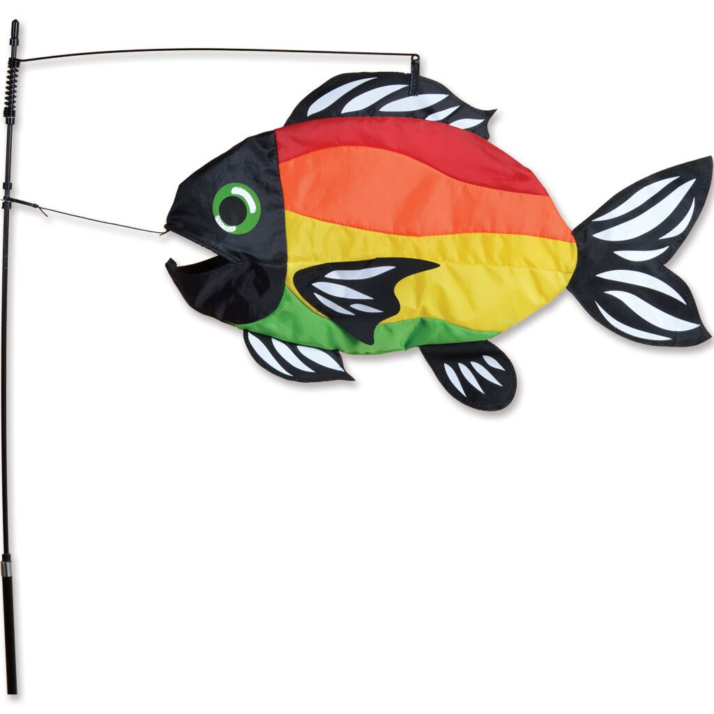 Bright Rainbow Swimming Fish